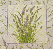 Lavendelruta